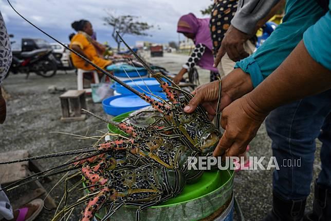 Pembeli memeriksa kondisi lobster (Nephropidae) yang dijual di pasar ikan di Palu, Sulawesi Tengah, Senin (6/4/2020). Kementerian Kelautan dan Perikanan sedang menyusun Strategi Budidaya Lobster Nasional karena berdasarkan Data Food and Agricultire Organization (FAO), selama periode 2010-2016 sekitar 96,91 persen produksi lobster Indonesia bersumber dari perikanan tangkap dan hanya 3,09 persen dari budidaya