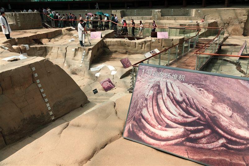金沙是世界上同期古代象牙最集中的遺址。(圖片來源:欣傳媒)