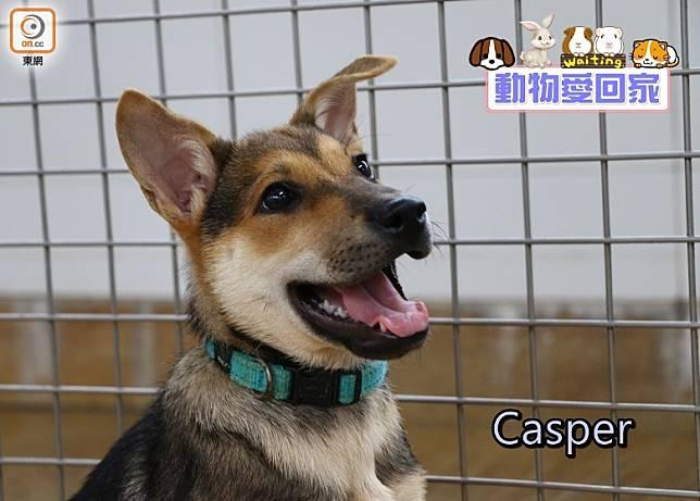 Casper個性帶點害羞,看似有點慢熱,但其實牠是一位食家。(愛協提供)