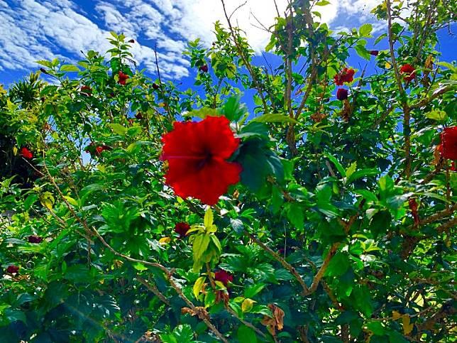 阿妹閒來便到處拍照,捕捉沖繩最天然的一面。(互聯網)