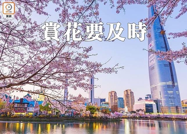 3月尾開始,韓國櫻花由南至北慢慢盛放,不妨坐濟州航空往首爾的優惠機票親身感受一番!(互聯網)