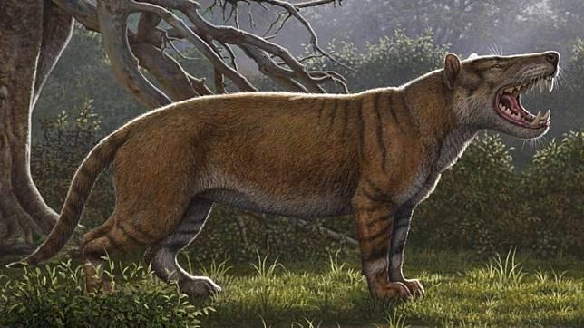 Fosil Karnivora Purba yang Hidup 22 Juta Tahun Lalu Ditemukan di Kenya
