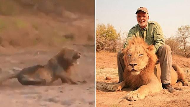 Parah! Pria Ini Tembak Singa yang Sedang Tidur Demi Hobi