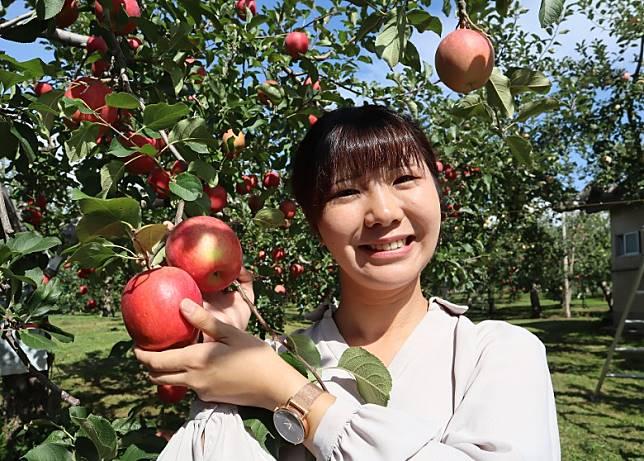 青森觀光蘋果園彼鄰八甲田山麓地區,日夜溫差極大,擁有栽種高質蘋果條件。(劉達衡攝)