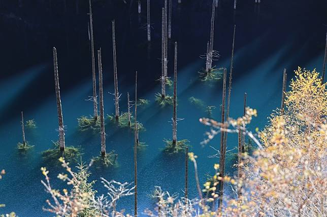 Lake Kaindy是因1911年發生地震而出現,位處海拔2,000米,長約400米,深約30米,因冰川湖水有利藻類浸沒在水中的樹幹中長生,展現出不常見的美態。(互聯網)