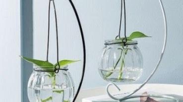 桌上型水耕植物選購指南!療癒100%幫你招財、防小人的好風水植物大公開