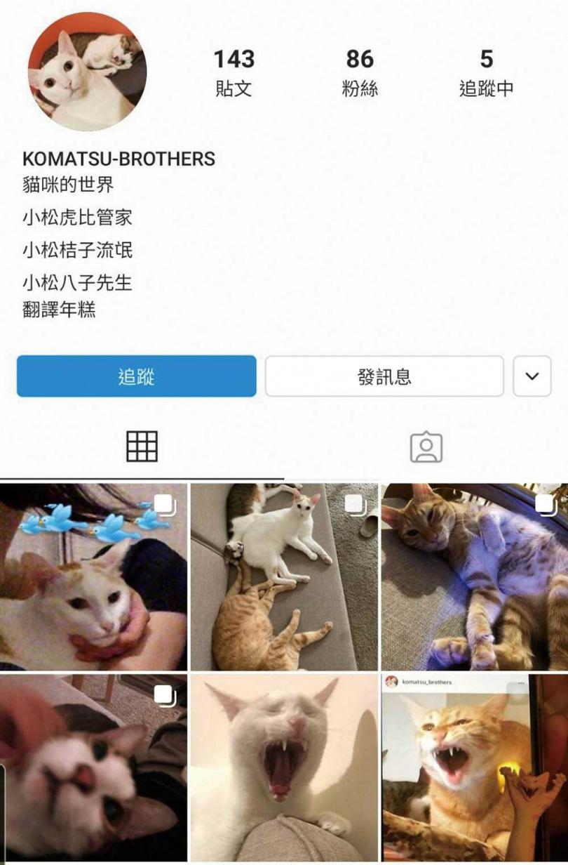 古靈精怪的王渝萱,替三兄弟開設IG帳號,還模擬貓咪的視角及語氣,寫下牠們的心情。(圖/王渝萱提供)