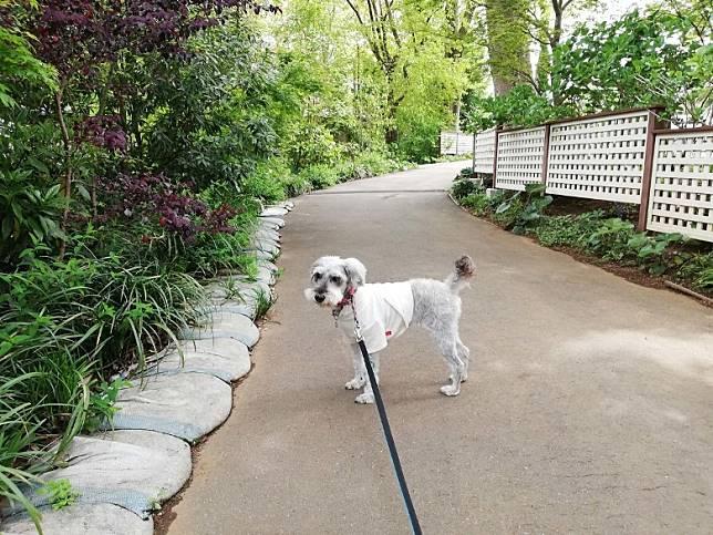 浸完溫泉,還可以到Doggys Island的「四季之花徑」散策。(互聯網)