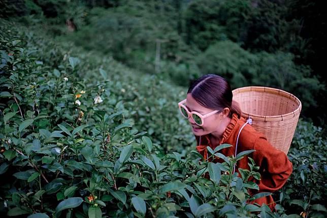 จิบชา ชมหมอก ฟอกปอด ที่ ไร่ชาลุงเดช จ.เชียงใหม่