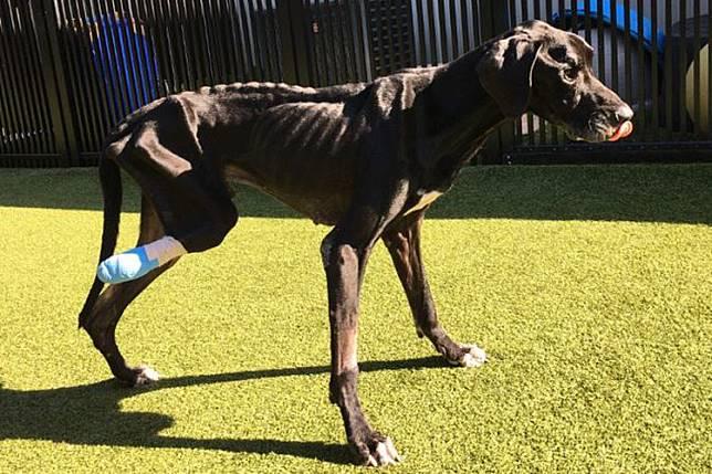 Dibiarkan Kelaparan oleh Pemiliknya, Anjing Ini Makan Kakinya Sendiri