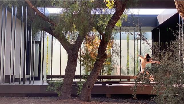 4K超高解像度,細緻至樹幹紋理、樹葉也顯而易見。(被訪者提供)