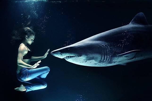 知名服務供應商「Salesforce」攜手海洋組織 用AI追蹤野生鯊魚