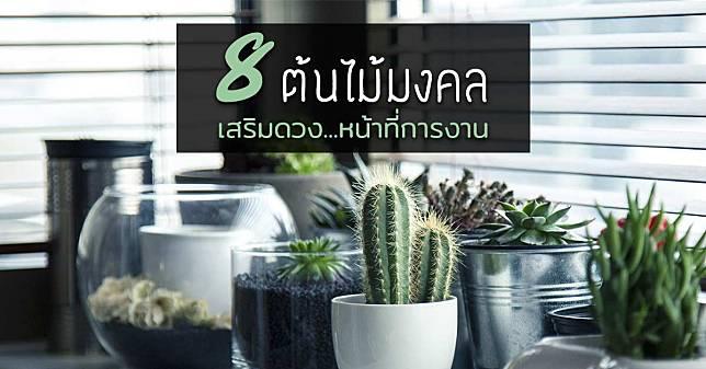 เสริมดวง เสริมสุขภาพ 8 ต้นไม้มงคลโต๊ะทำงาน ควรคู่มนุษย์ออฟฟิศ