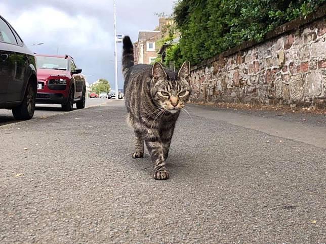 調皮貓咪自己搭便車遊遍蘇格蘭 主人苦笑無奈下禁足令!