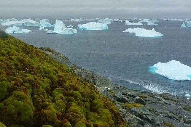 Daerah berlumut di Antartika.