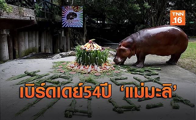 ชมภาพความน่ารักงานวันเกิด 'แม่มะลิ' ฮิปโปฯ อายุยืนสุดในไทย