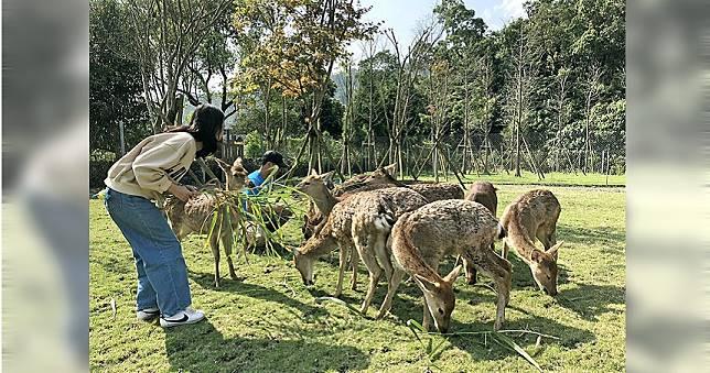 在台灣就有超多據點可以草原上餵梅花鹿、喝咖啡 傻瓜才會往日本跑!