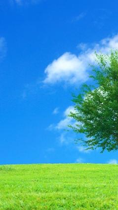 誉田町内の困ったを投稿する御用聞き板 千葉市緑区