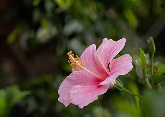 6 Jenis Bunga Untuk Obat Aman Dan Menyehatkan Merdeka Com Line Today