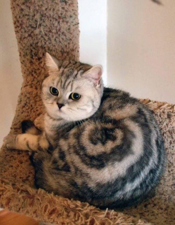 Kumpulan Kucing Dengan Corak Bulu Yang Unik