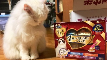 2019年日本必買寵物零食推薦清單:貓奴必看的貓咪零食篇