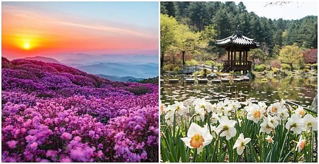 錯過櫻花別傷心~韓國五月限定花海慶典,畫面太美必須看!