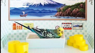 讓家裡小寵物也涼一下的迷你復古澡堂