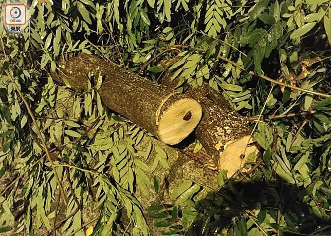塌下斷樹遭移除至一旁。(楊日權攝)