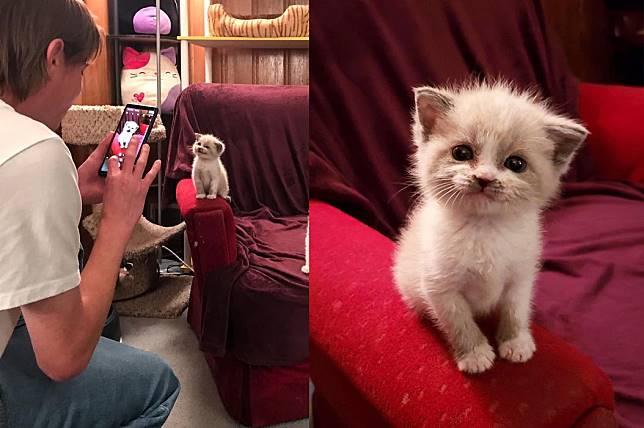 Nama Anak Kucing Kembar 3 81021 Nama Untuk Kucing Comel Lucu Dan Unik
