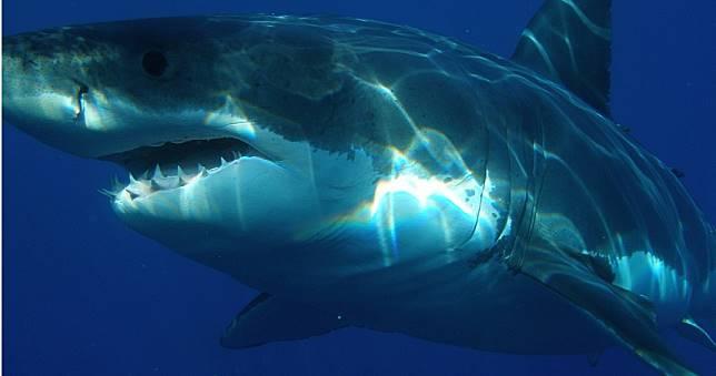 大溪地女遊客下水賞鯨遭「鯊吻」 左胸撕裂雙腕被扯斷