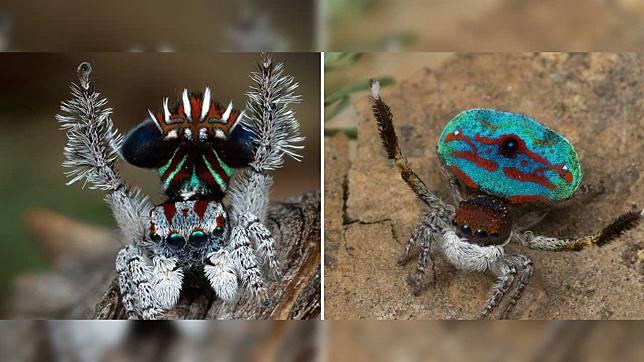 7 Spesies Laba-laba Baru Ini Cantiknya Bukan Main