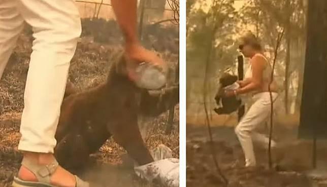 Aksi Tony Doherty menyelamatkan koala yang terjebak kebakaran.