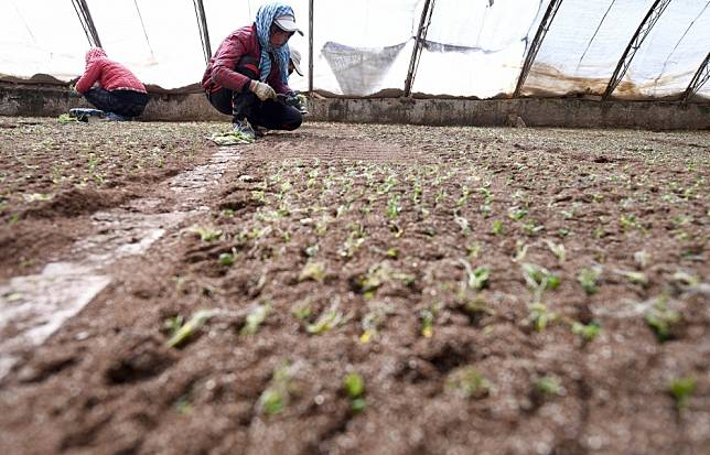 Coronavirus crisis a chance for China 'to refocus on food security'