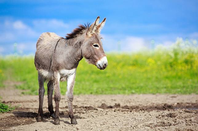 A donkey in the field.