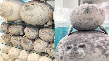 快來買!大阪海遊館「圓滾滾海豹」抱枕正式上架,跟本尊擺在一起對照超可愛!
