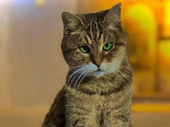 Gli, Kucing Selebriti di Hagia Sophia Turki
