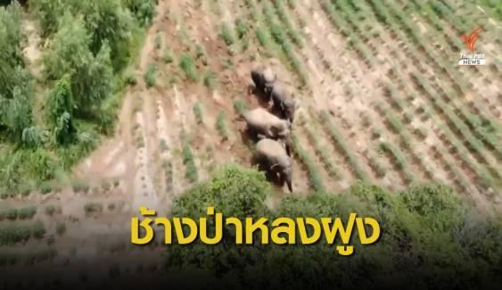 พบฝูงช้างป่าเขาอ่างฤาไนอีก 4 ตัวที่ จ.ปราจีนบุรี