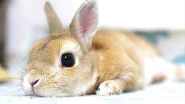 治癒兔兔攝影展