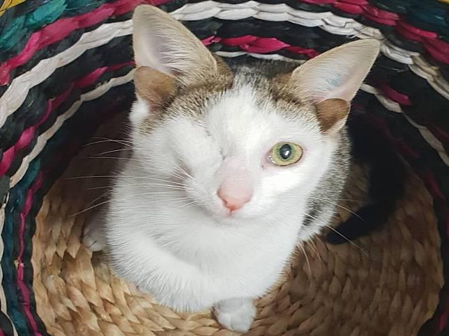 獨眼貓咪有四隻耳朵 隨時像在啾咪眨眼可愛度加倍!