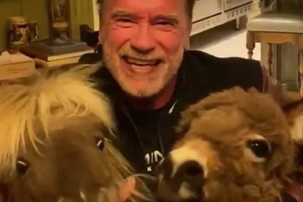 Bantu Perangi Corona, Arnold Schwarzenegger Sumbang APD Senilai USD1 Juta