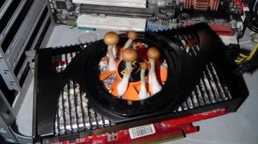 俄羅斯網友電腦一個月沒用卻壞了 拆開主機居然發現顯卡長出菇?