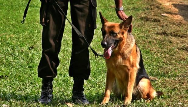 Anjing Terkam Dan Tewaskan Prt Pemilik Terancam Pidana