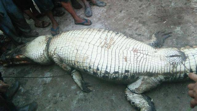 Body parts of farmer, who was missing since Tuesday, found inside crocodile in Indonesia