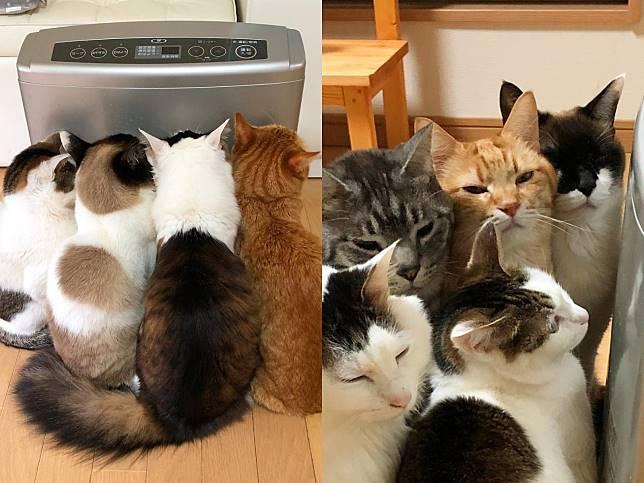 貓咪全擠暖爐搶佔搖滾區 網被萌翻:冬季限定烤棉花糖!
