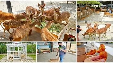 恆春墾丁親子景點 鹿境梅花鹿生態園區~不到奈良也能開心餵可愛小鹿