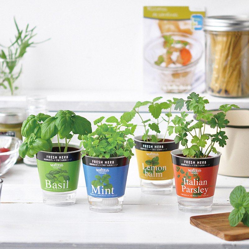 Fresh Herb 香草類 迷你 水耕栽培 種植組