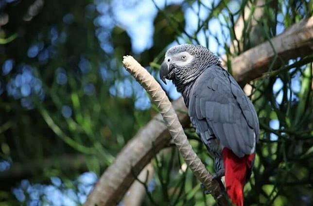 70+ Gambar Hewan Burung Beo HD Terbaik