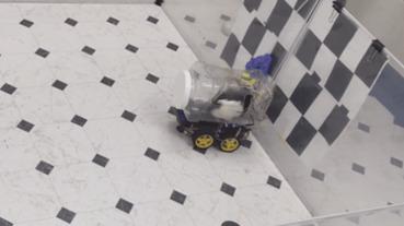 科學家教老鼠開車,發現可以紓壓:從事複雜技能可能降低壓力