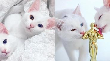 世界上就是有這麼巧的事,牠們不只是雙胞胎,連瞳孔顏色也一樣!
