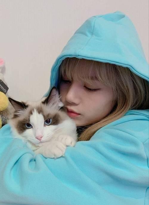 วิถีทาส!! 50 ไอเดียถ่ายรูปกับน้องแมวน่ารักๆ ที่ต้องจำแล้วนำไปใช้! |  Ladyissue Magazine | LINE TODAY